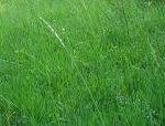 正思:正しく思うこと・・・隣接の空き地のボウボウの草を刈る