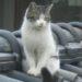 野良猫との格闘の顛末記